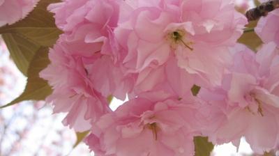 Mini110_pink_5