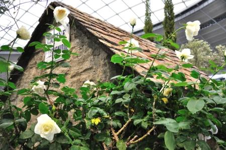Bara_gardening_07
