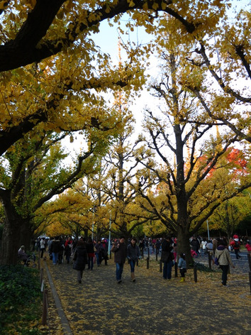 Autumnal_leaves_gaien_01