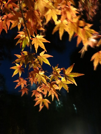 Autumnal_leaves_rikugien_gardens_01