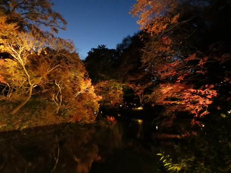 Autumnal_leaves_rikugien_gardens_02