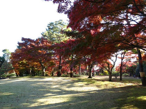 Autumnal_leaves_tonogayato_garden_2