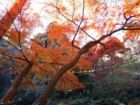 Autumnal_leaves_tonogayato_garden_3