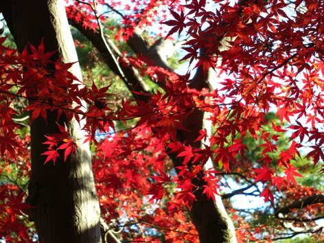 Autumnal_leaves_tonogayato_gardens_