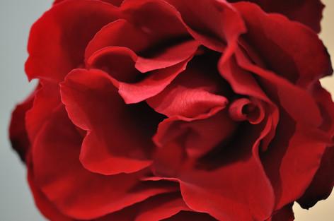 Rosesandgardeningshow2012_01