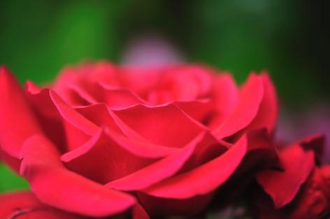 Rosesandgardeningshow2012_03