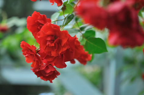 Rosesandgardeningshow2012_04