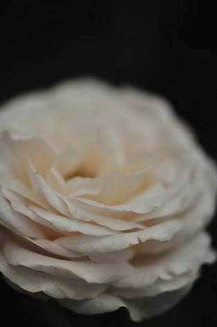 Rosesandgardeningshow2012_05