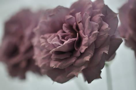 Rosesandgardeningshow2012_09