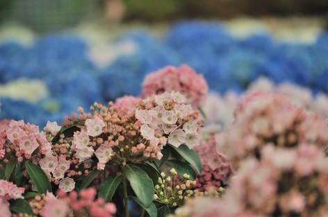 Rosesandgardeningshow2012_25