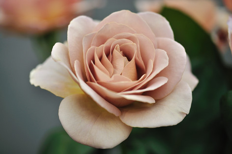 Rosesandgardeningshow2012_34