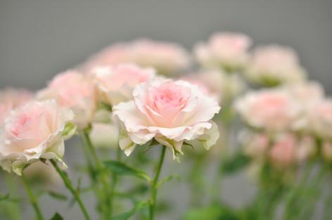 Rosesandgardeningshow2012_35