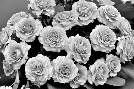 Rosesandgardeningshow2012_36