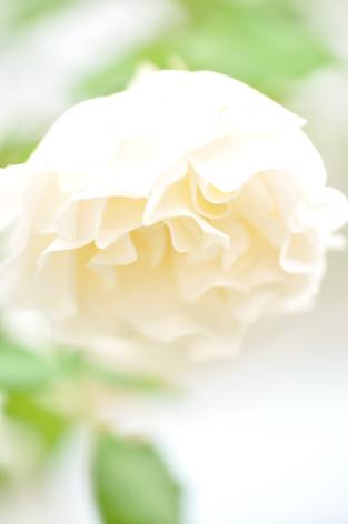 Rosesandgardeningshow2012_40