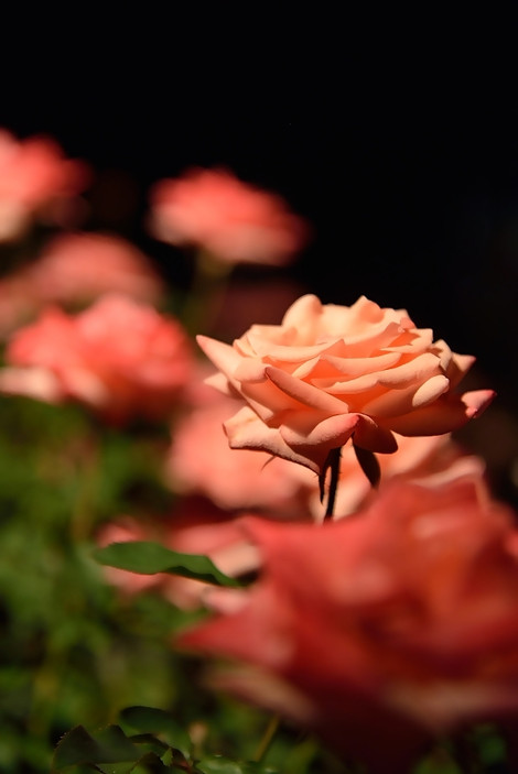 Jindai_botanical_park_01