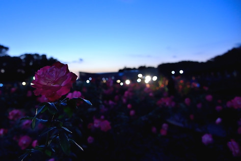 Jindai_botanical_park_02