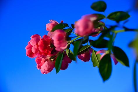 Jindai_botanical_park_03