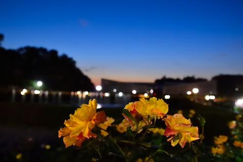 Jindai_botanical_park_05