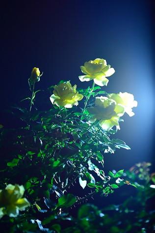 Jindai_botanical_park_06