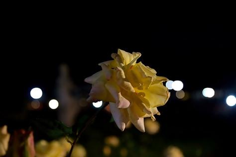 Jindai_botanical_park_10