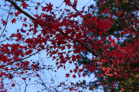 Nikko_in_autumn_015
