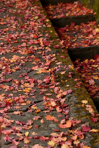 Nikko_in_autumn_044