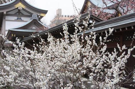 Yushima_tenjin_plum_blossom_fest_11