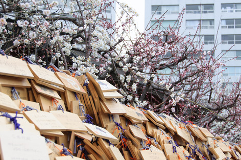 Yushima_tenjin_plum_blossom_fest_14