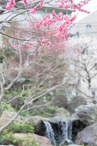 Yushima_tenjin_plum_blossom_fest_16