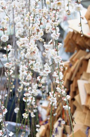 Yushima_tenjin_plum_blossom_fest_21