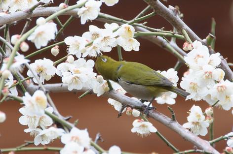 Yushima_tenjin_plum_blossom_fest_45