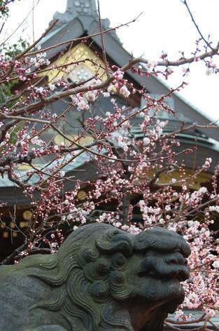Yushima_tenjin_plum_blossom_festi_5