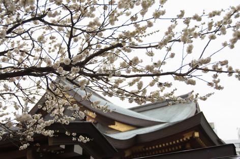Yushima_tenjin_plum_blossom_festi_7