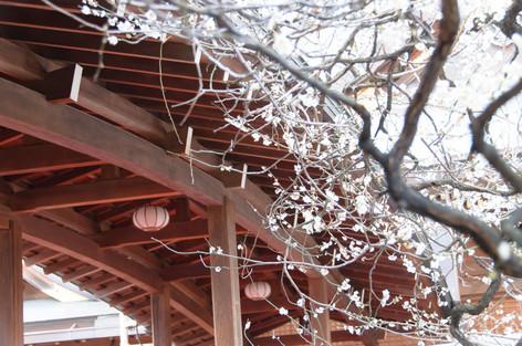 Yushima_tenjin_plum_blossom_festi_9