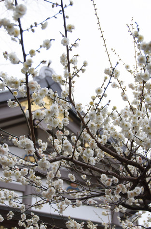 Yushima_tenjin_plum_blossom_festiva