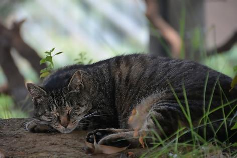 Stray_cat_01