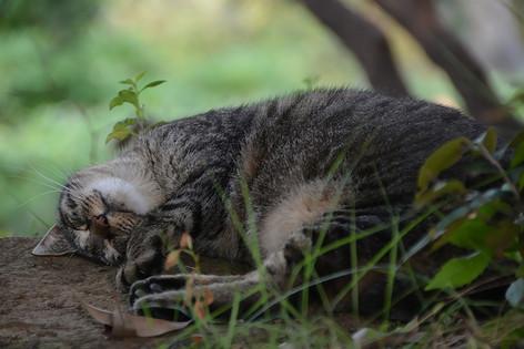 Stray_cat_03