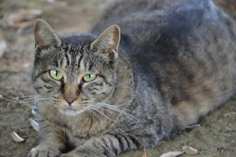 Stray_cat_04
