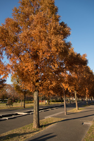 2013_autumnal_leaves_01