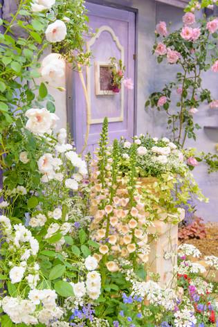 International_roses_gardening_sh_12