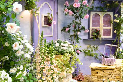International_roses_gardening_sh_13