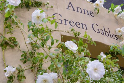 International_roses_gardening_sh_15