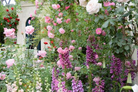 International_roses_gardening_sh_23