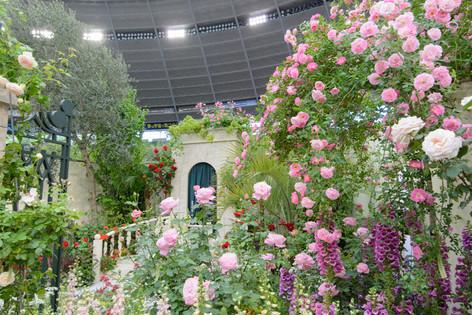 International_roses_gardening_sh_24