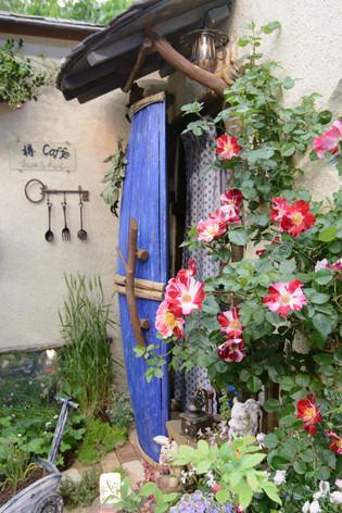 International_roses_gardening_sh_27