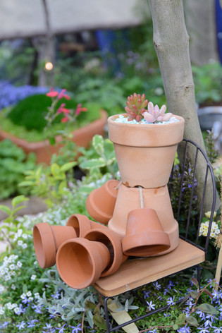 International_roses_gardening_sh_29