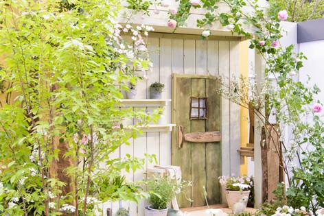 International_roses_gardening_sh_36