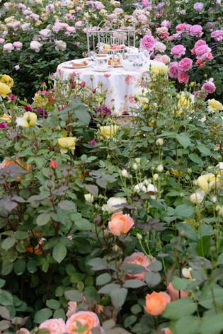 International_roses_gardening_sh_38