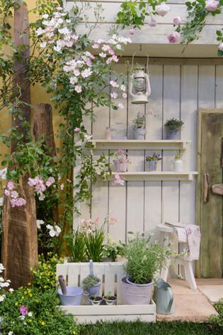 International_roses_gardening_sh_39