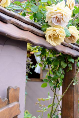 International_roses_gardening_sh_40